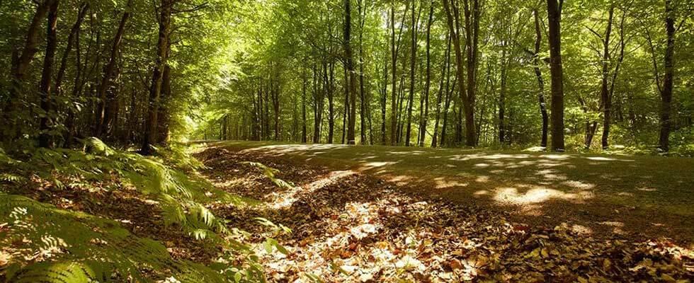 Sentier bois