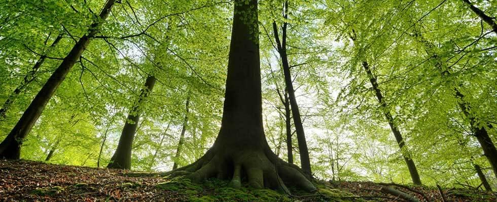 Racines arbres